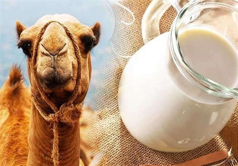 شیر شتر و تنظیم دیابت